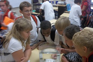 Students Investigate Tadpoles